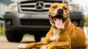 Koira autossa? Näppärät tuotteet koiraihmisen kesäautoiluun