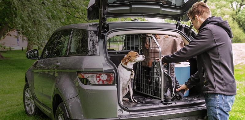 Koiraa istuu kiltisti omalla paikallaan Travall-koiraverkon ja -tilanjakajan avulla.
