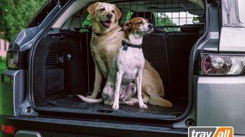 Koiraverkko rajaa turvallisen matkustuspaikan lemmikille