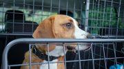 Travall-koiraveräjät estävät lemmikin karkailun
