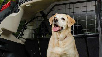 Rajaa koirallesi oma matkustustila Travall-verkon avulla